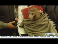 http://iran.mycityportal.net - Space monkey: New pictures of monkey Iran sent into space - #iran