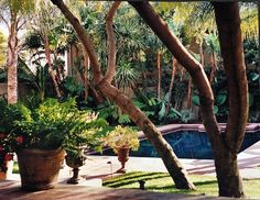 An urban garden LA style! We planted this corner with palms, birds of paradise, alocasia, tree ferns and other tropical plants to create a poolside idyll. The water  is dark, but still very blue, a reflecting pool, but wonderful for swimming. #stampsandstamps #historicarchitecturalrenovation #interiordecoration #gardendesignf antastic photo thank you to @jeanrandazzo