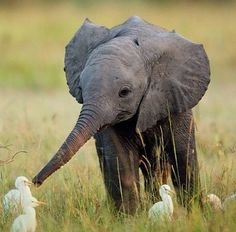 Baby elephant making some new friends