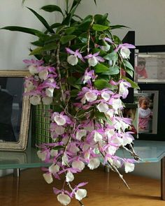 A beautiful orchid plant.