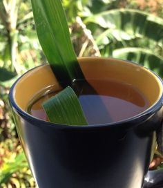 Fever Grass Tea (aka lemon grass) is a popular bush remedy in Jamaica for treating fevers and aiding in a speedy recovery. This bush tea is also a favorite of Jamaicans for the treatment of the common cold and coughs. The benefit of fever grass however, does not stop at just treating colds...