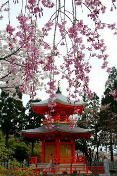 Shobo-ji temple, Kyoto, Japan: photo by 92san