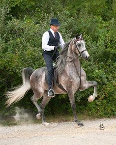 Arabhorse.com - Rooker Training Stable - Arabian Horse