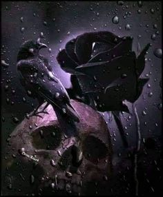 Share the joy 127 Crow, black rose and skull. Source by roseskulls Dark Gothic Art, Gothic Fantasy Art, Gothic Wallpaper, Skull Wallpaper, Black Roses Wallpaper, Skull Rose Tattoos, Beautiful Dark Art, Skull Pictures, Skull Artwork