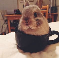 Can someone write this picture book? Thanks, from post-coffee-Heather RT @EmergencyPuppy: bunny, in a teacup