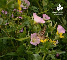 moth, wildlife, native plants,  hummingbird clearwing moth