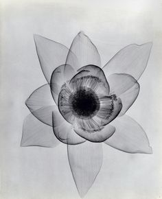 When selecting flowers we are often first attracted to their vibrant colors, eager to choose a bright orange lily or deep red rose. Dr. Dain L. Tasker, an early 20th century radiologist, was attracted to a different feature of the blooms—their anatomy. Using X-ray film to highlightthe soft laye