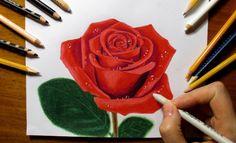 How to Draw a Rose with Colored Pencils | Jasmina Susak