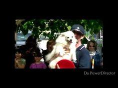 Agility dog simba show