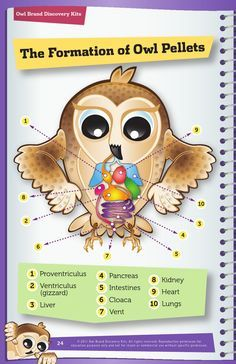 Great Summer Project! Owl Pellet Lab Booklet for Kids. Use this free ...
