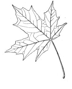 Sugar Maple Leaf Coloring Page