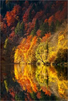 Autumn. With the reflection it looks like an expanding wave of color!