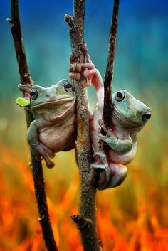 Two Buds Just Hangin' Out