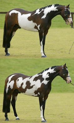 "Before and after of the ""horse"" photo"