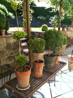 Topiaries - Beautifully Potted.