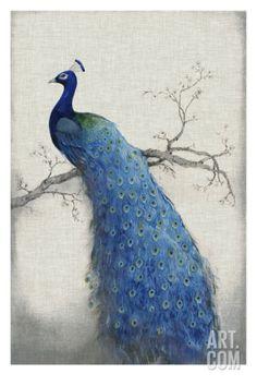 Peacock Blue II Giclee Print by Tim O'toole at Art.com