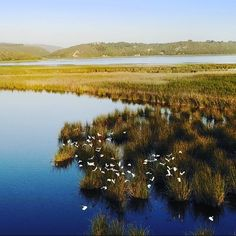egrets landing on the banks of the river at sunset Wilderness South Africa, Holiday Accommodation, Romantic Getaway, Banks, Landing, National Parks, Cottage, Ocean, River