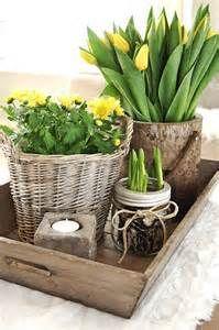 Plants in baskets.