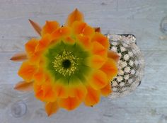 Homely 45 Pcs//Bag Heirloom Tricolor Flower Outdoor /&Amp; Indoor Blooming Graden Sementes De Flowers for Home Garden Decor 8