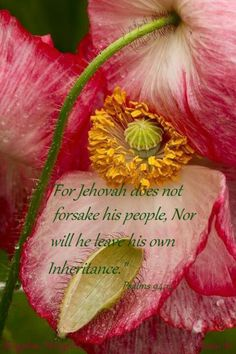 """""""For the Lord will not cast off his people, neither will he forsake his inheritance."""" Psalm 94:14"""