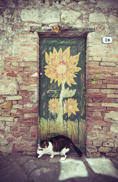 Cat With Flower Door - Colle di Val d'Elsa Tuscany, Italy TOSCANA... TOSCANA,TOSCANA, TOSCANA .... ITALIA!!!!!!