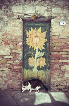 Cat With Flower Door - Colle di Val d'Elsa Tuscany, Italy
