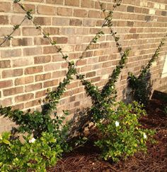 1000 Images About The Fence Along The Lane On Pinterest