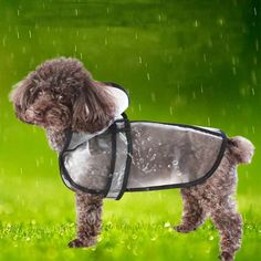 Transparent Raincoat Dog Clothes For Small Dogs Raincoat Slicker Overalls Pet Waterproof Rain Coat For Dogs Hooded Pets Clothing. Black Rain Jacket, North Face Rain Jacket, Rain Jacket Women, Baby Raincoat, Hooded Raincoat, Small Dog Coats, Small Dogs, Funny Dogs, Cute Dogs