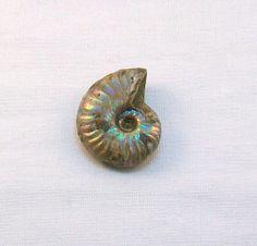 Small Unpolished Opalized Ammonite Fossil by KnotJustHempJewelry, $20.00