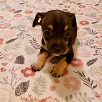 Dachshund Rescue Of Los Angeles In Los Angeles California Cute