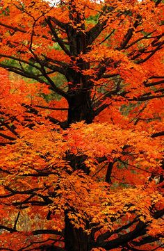 the most beautiful colors, must be a Maple tree!