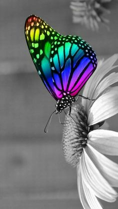 This is a reflection of how beautiful life cud be Flower Background Wallpaper, Rainbow Wallpaper, Summer Wallpaper, Butterfly Wallpaper, Butterfly Art, Flower Backgrounds, Disney Wallpaper, Rainbow Butterfly, Rainbow Photography
