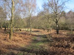 Broc Hill Cannock Chase