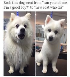 Animal Memes That Are Just Way Beyond Funny - 7