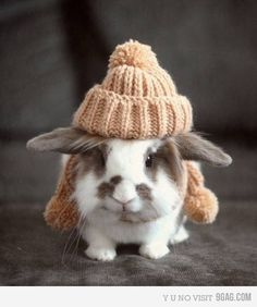 animals wearing clothes | Tumblr