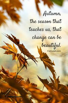 Autumn Scenes, Autumn Cozy, Seasons Of The Year, Mabon, Fall Pictures, Fall Images, Happy Fall Y'all, Hello Autumn, Autumn Inspiration