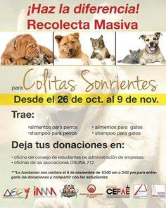 ¡AMA-sociado, participa de esta donación masiva para perritos y gatitos junto a FMA UPR Río Piedras! Trae comida o shampoo de perros y gatos a 0-212 o a la oficina del CEFAE para hacer tu donación :) desde el 26 de octubre hasta el 9 de noviembre. ¡Nuestros peludos te los agradecerán!
