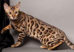 Drsaynt-005 - DrSaint - Saynt - Saint - Cats