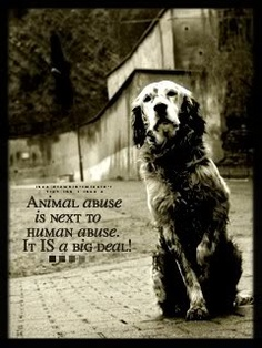 I am heavily in 2 animal right and a animal activist. I am so sorry if some of the pictures are graphic and so many animals r abused and neglected. I try 2 make awareness of the abuse and all the unloved who need homes. I am sorry again if u r offend in anyway    Darlene