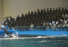 "'When visiting the dolphinarium in Pyongyang, you are allowed to photograph the animals, but not the soldiers who make up 99% of the crowd""... North Korea"