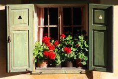 Fioriere Per Persiane ~ 700 fantastiche immagini su geraniums brighten the homes! nel 2019