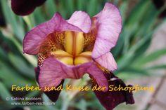 Farben sind Küsse der Schöpfung http://www.farben-reich.com/
