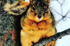Drop Everything Because It's Fat Squirrel Season