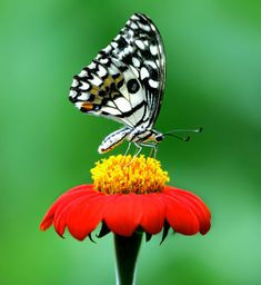 Color Feast: The Greatest Butterfly Photo Collection. Part 1-AmO Images-AmO Images