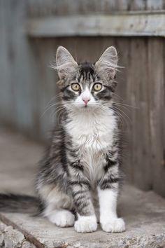 Top 5 Kids Friendly Cat Breeds