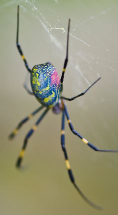 Pretty Spiders- The seer- Mediators, The Spider is very important because they represent True Wisdom as Well as True Faith. The symbol of Good reward in Patience! Reptiles, Spiders And Snakes, Scary Spiders, Cool Bugs, Itsy Bitsy Spider, A Bug's Life, Beautiful Bugs, Bugs And Insects, Ants