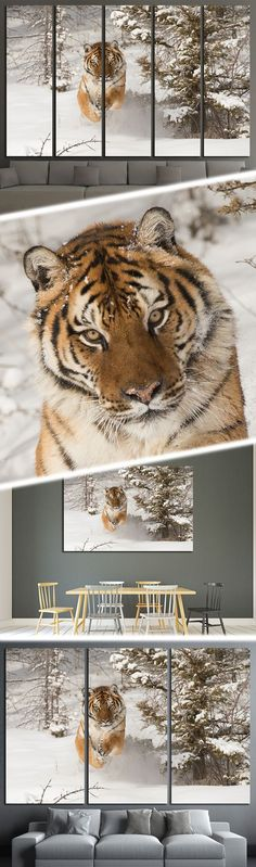 Explore our collection of Tiger Canvas Prints for large Wall Decoration. Currently on SALE -33% OFF