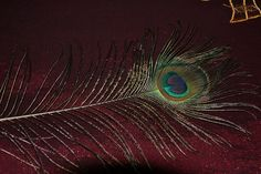 Peacock Eye-Feather - Flickr - Photo Sharing!