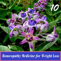 Homeopathy Medicine for Weight Loss