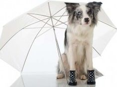 Top 6 Best Dog Booties That Stay On Dog Pool Ramp, Pet Ramp, What To Feed Dogs, Can Dogs Eat, Best Dog Food, Best Dogs, Dog Walking, Walking Boots, Meds For Dogs